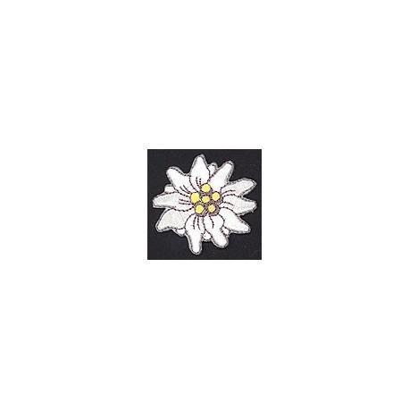 Edelweiss - Welti, 02_3358