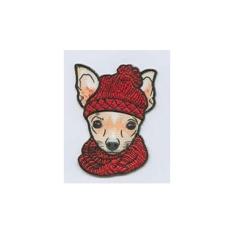 Hund mit Mütze_4729